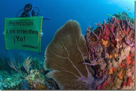 corales mexicanos2