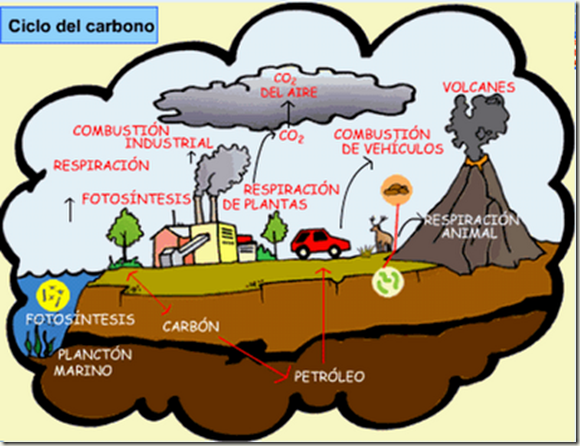 ciclodecarbono