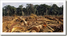 1359_Deforestation-Amazon-1024x667_1_460x230