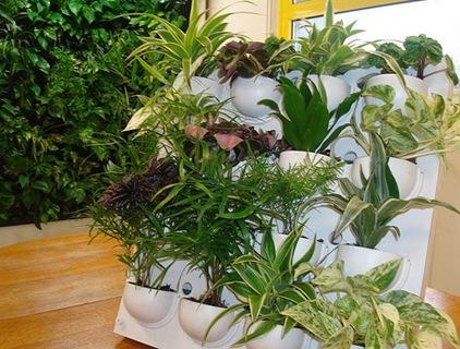 Utilisima luz en casa jardineria imagui - Jardineria en casa ...