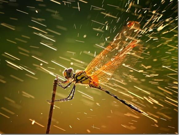 libelula Concurso de fotografía National Geographic