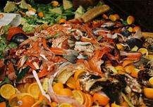 comida en la basura 1 ¿Por qué necesitamos el Día de la Tierra?, 7 problemas que tenemos que resolver