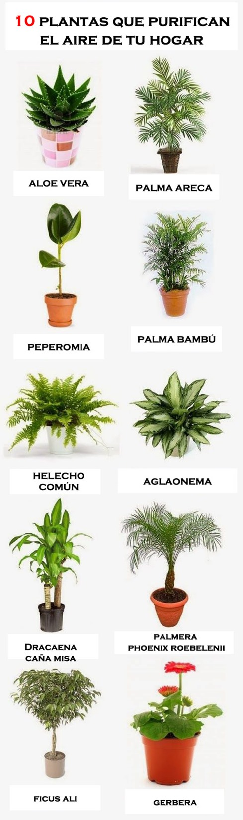 las 10 mejores plantas para purificar el aire en casa infograf a conciencia eco. Black Bedroom Furniture Sets. Home Design Ideas
