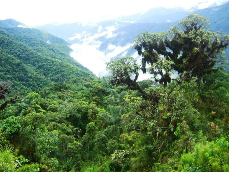 bosque-tropical.jpg