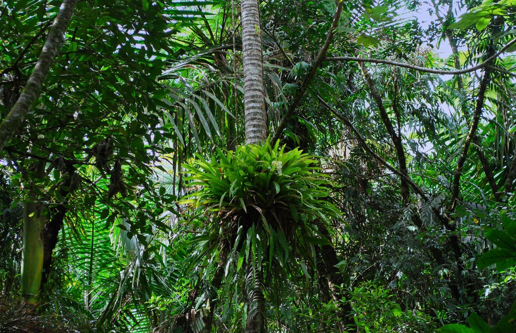 Las selvas tropicales, así tan verdes dan ganas de irse a vivir a ellas. Imagen: Trish Hartmann