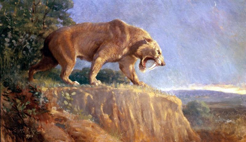 El smilodon o tigre dientes de sable es el felino extinto más conocido. Imagen: Charles R. Knight