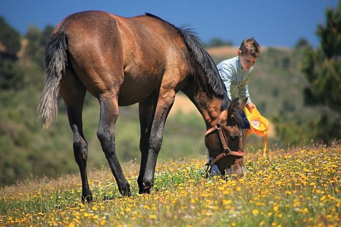 caballo huerto alegre