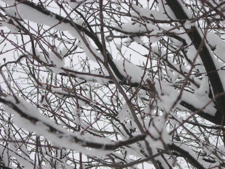 ramas nieve-20151222