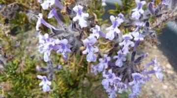 Las plantas también sufren las consecuencias del cambio climático. Imagen: jardín botánico de fuerteventura