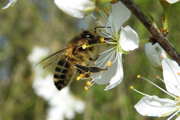 Día Mundial de la Naturaleza y la Vida Silvestre