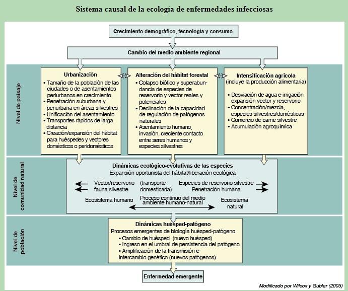 Interrelación entre la salud humana y el medio ambiente